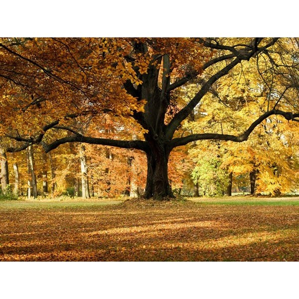 Fotomural TREE