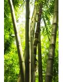 Fotomural Bosque de Bamb%C3%BA FNA005, 135cm. x 203cm., Vinilo Autoadhesivo Mate, Todo Color, Invertir, 0x0x0x0 cm.