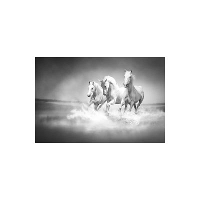 Fotomural Cavalos FAN017, 160cm. x 230cm., Vinilo Autoadhesivo Mate, Blanco y Negro, Original, 0x0x0x0 cm.