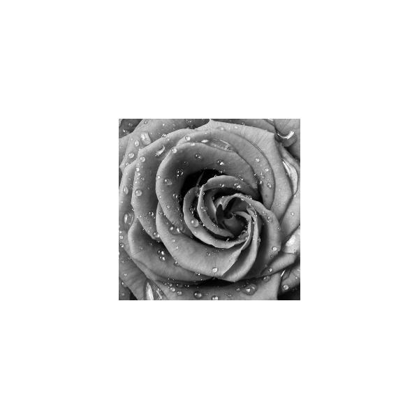 Fotomural Flor Violeta FFL004, 300cm. x 266.5cm., Vinilo Autoadhesivo Mate, Blanco y Negro, Original, 0x0x0x0 cm.