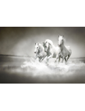 Fotomural Cavalos FAN017, 100cm. x 66cm., Vinilo Autoadhesivo Mate, Todo Color, Original, 0x0x0x0 cm.
