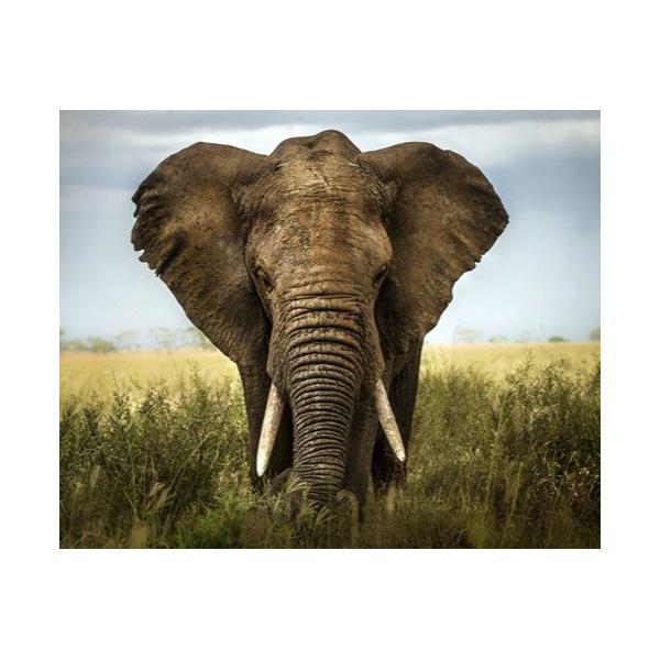 Fotomural Elefante FAN034, 210cm. x 170cm., Vinilo Autoadhesivo Mate, Todo Color, Original, 18.75x0x18.75x0 cm.