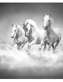 Fotomural Cavalos FAN017, 166cm. x 200cm., Vinilo Autoadhesivo Mate, Blanco y Negro, Original, 50.96x0x23.88x0 cm.
