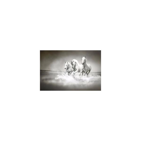 Fotomural Caballos FAN017, 100cm. x 66cm., Vinilo Autoadhesivo Mate, Todo Color, Original, 0x0x0x0 cm.