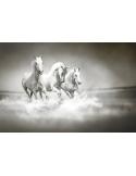 Fotomural Cavalos FAN017, 300cm. x 198cm., Vinilo Autoadhesivo Mate, Todo Color, Invertir, 0x0x0x0 cm.