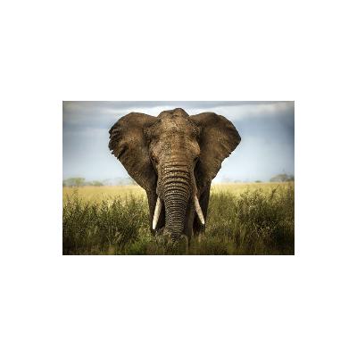 Fotomural Elefante FAN034, 140cm. x 93.1cm., Vinilo Autoadhesivo Mate, Todo Color, Original, 0x0x0x0 cm.