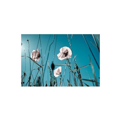 Fotomural Amapolas Blancas FFL002, 200cm. x 230cm., Vinilo Autoadhesivo Mate, Todo Color, Original, 0x0x0x0 cm.