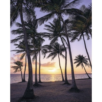 Fotomural PALMTREES ON BEACH SH022-VD2