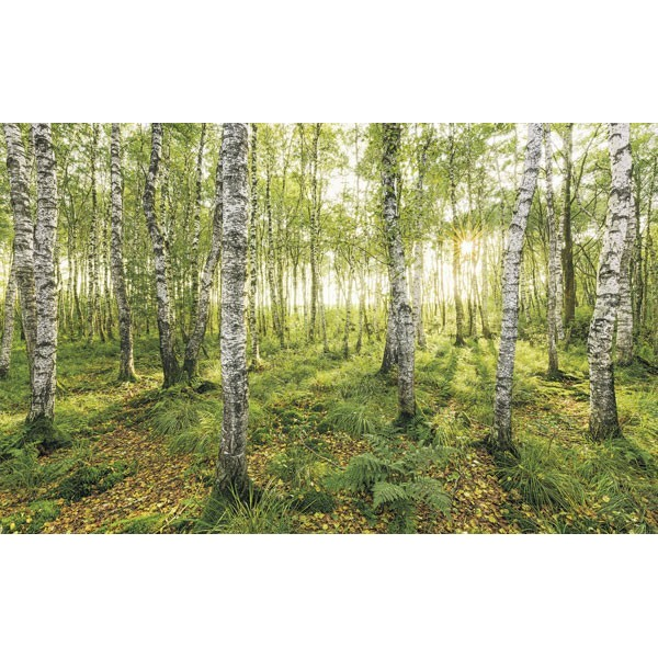 Fotomural BIRCH TREES SH043-VD4
