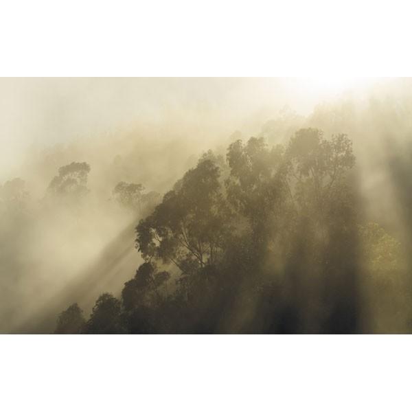 Fotomural MISTY MOUNTAIN SH067-VD4