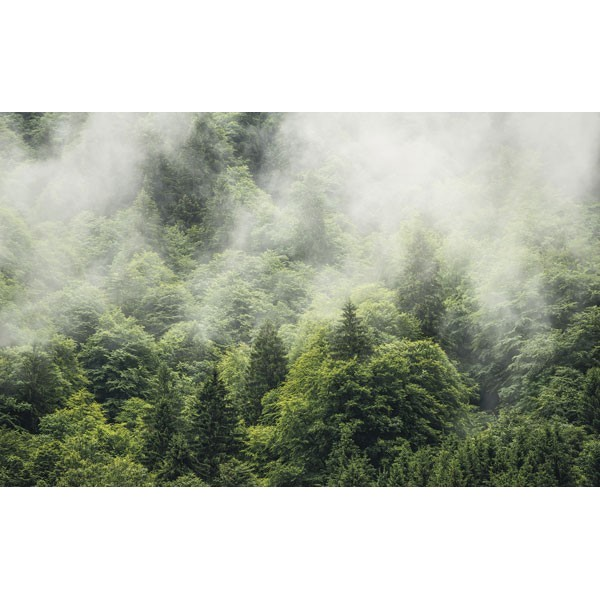 Fotomural FOREST LAND SH061-VD4