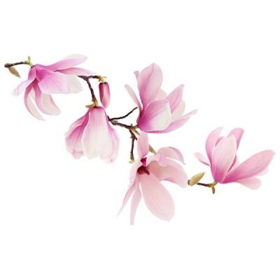 Vinilo Floral 1004