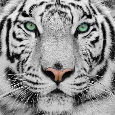 Fotomural Tigre FAN001