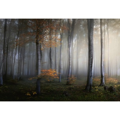 Fotomural FOGGY FOREST