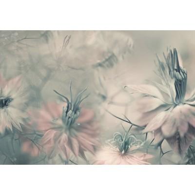 Fotomural NIGELLA FLOWERS