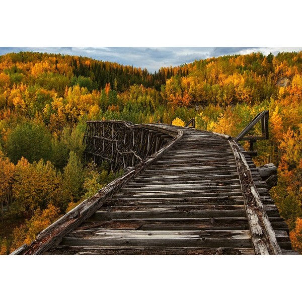 Fotomural BRIDGE IN THE FOREST