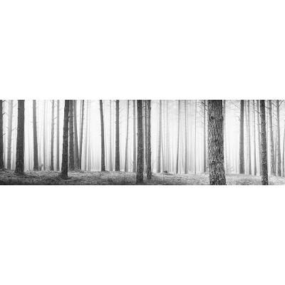 Fotomural Panorâmico Bosque em preto e branco OP-12005