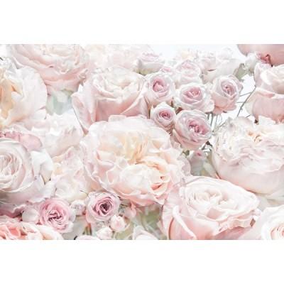 Fotomural SPRING ROSES