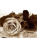Fotomural BLACK AND WHITE ROSE