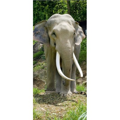 Fotomural ELEPHANT FT-0208