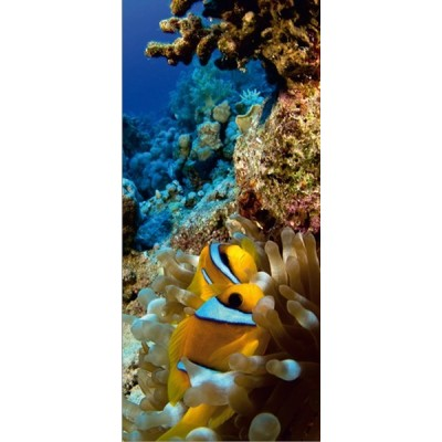 Fotomural CORAL REEF FT-0223