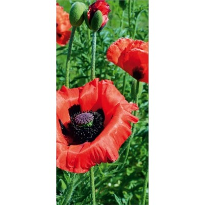 Fotomural POPPY FT-0009