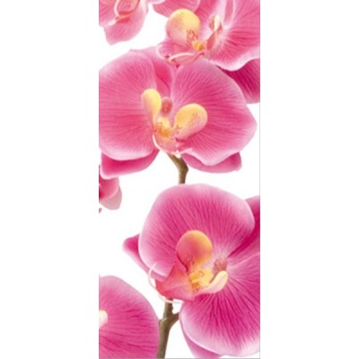 Fotomural PINK ORCHID FT-0027