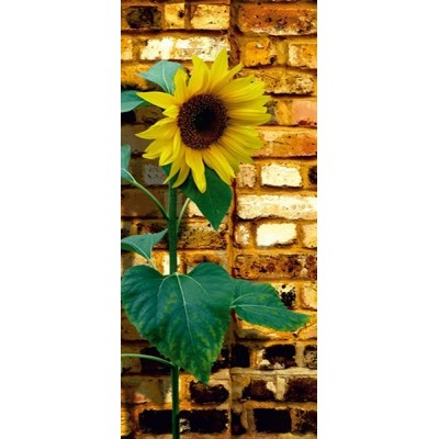 Fotomural SUNFLOWER ON BRICKS FT-0042