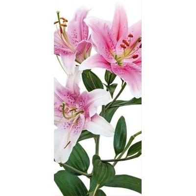 Fotomural PINK LILY FT-0213