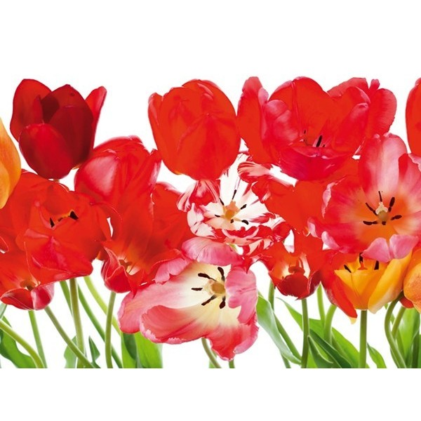 Fotomural RED TULIPS BIG FT-0067