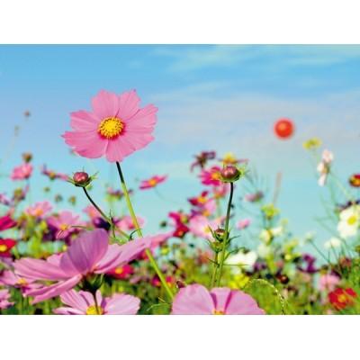 Fotomural SUMMER FT-0129