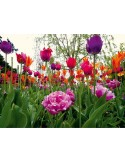 Fotomural TULIPS AND PEONY FT-0136