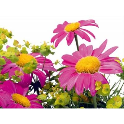 Fotomural FIELD FLOWERS FT-0122