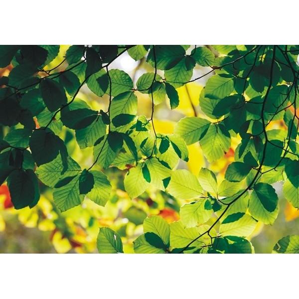 Fotomural GREEN SPRING FT-0310