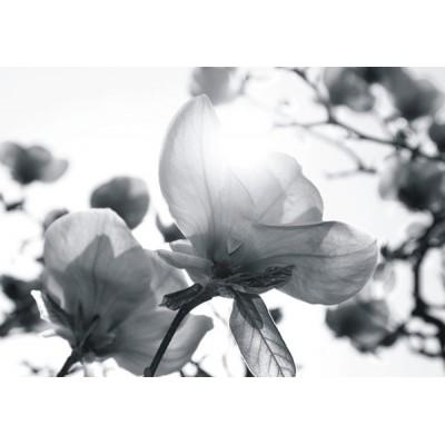 Fotomural TRANSPARENCY ROSES FT-0354
