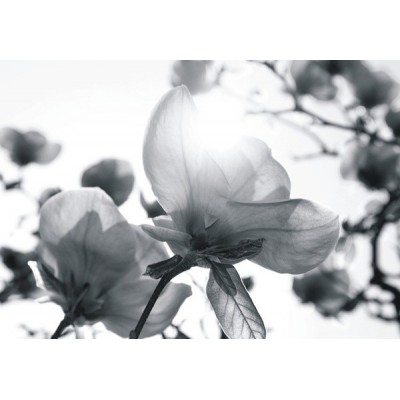 Fotomural TRANSPARENCY ROSES FT-0354