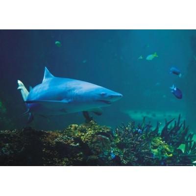 Fotomural SHARK