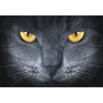 Fotomural GREY CAT