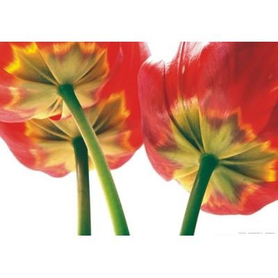 Fotomural FLOWERS