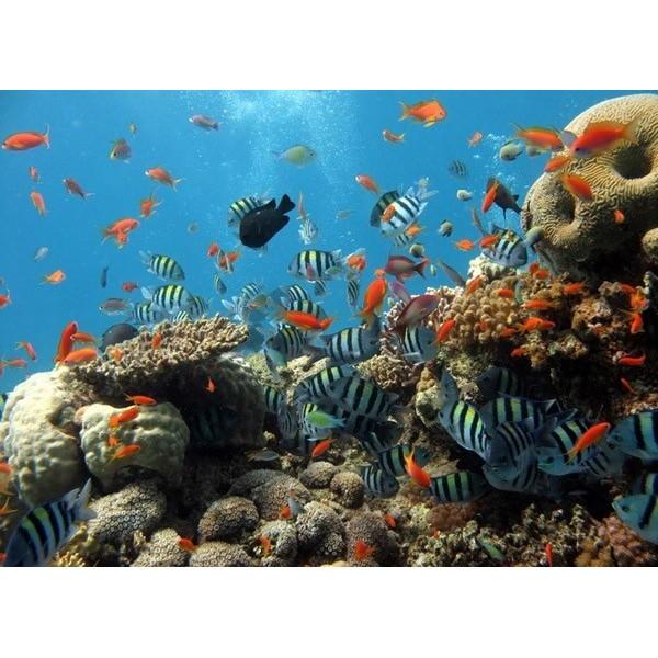 Fotomural OCEAN 4-005P